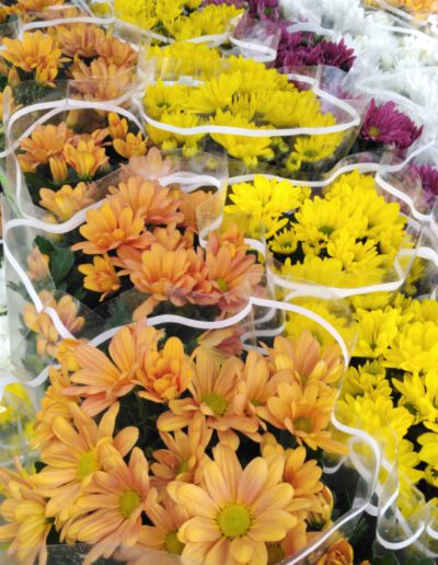 Chrysanthemen je 2,00 €